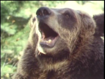 Grizzly Adams 14