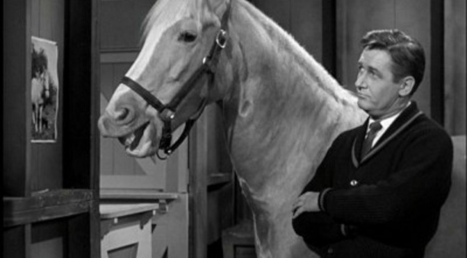 'Mister Ed' (Season 1): Classic 60s sitcom still delivers the funny