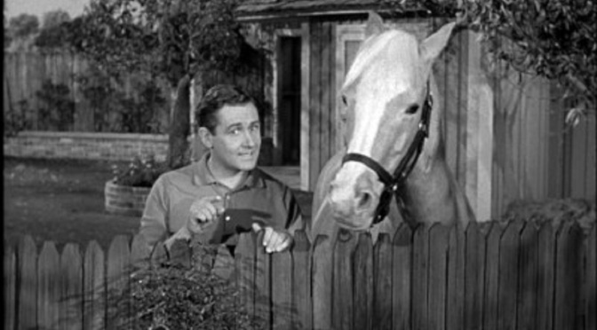 'Mister Ed' (Season 2): Popular sitcom moves from syndication to CBS